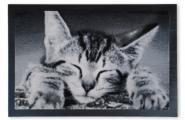 Sauberlauf-Fußmatte Katze Color