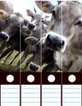 Design Labels Cows