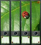 Design Labels Ladybird