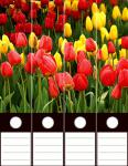 Design Labels Tulips