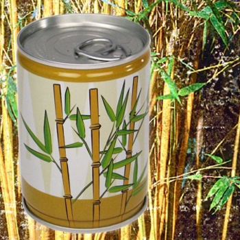 Dosenpflanze Bambus