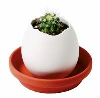 Eggling - Pflanzen aus dem Ei